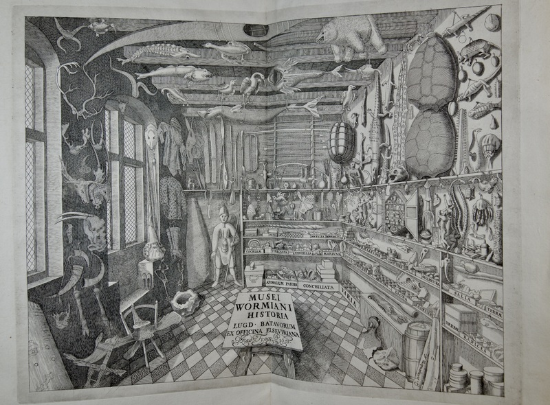 Natural historians like Ole Worm (1588 – 1654) sought to classify and understand the diversity of living organisms according to differences in their appearance in order to better understand God's design in nature.  This frontispiece depicts Worm's famous cabinet of curiosities, a massive collection of artifacts from across the globe, which included taxidermized animals, fossils, and weapons and tools owned by indigenous peoples. Look closely and you'll notice several species now extinct, including the Great Auk, a seabird that Worm also owned as a pet.