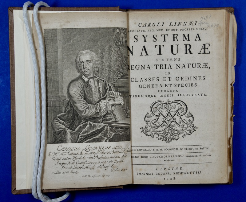 Swedish naturalist and explorer Carl Linnaeus (1707-1778) revolutionized scientific understanding of the diversity of the natural world with the publication of Systema naturæ in 1735. Linneaus established binomial nomenclature, the system of formally classifying and naming organisms according to their genus and species. In contrast to earlier naming conventions that used long descriptive phrases, binomial names do not judge different species on their perceived quality or desirability. Serving as a means by which species could be universally addressed, this new hierarchical system allowed scientists to better conceptualize relationships between organisms.