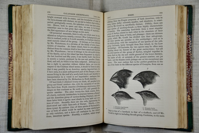 Charles Darwin's (1809-1882) narrative of his voyage around the globe features the famous Galapagos finches whose beaks helped him develop his theory of evolution by natural selection. By observing the incredible variety of beak shapes among finch species, he postulated that the beak of an ancestral finch who had arrived at the remote island chain had adapted over time to equip the finches to acquire different food sources. Drawing on the diversity of Galapagos finches and other animals he encountered as examples of evolution by natural selection, Darwin's theory fundamentally changed human understanding of species and how ecosystems change over time. Darwin posited that many species have died out as a result of competition between animals, and that this process had occurred gradually and continuously throughout the history of life. However, he neglected to clarify the role humans can play in driving species extinction, and believed that sudden disappearances of many species, or mass extinctions, did not actually occur.